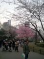 【2011/4/2】 不忍池