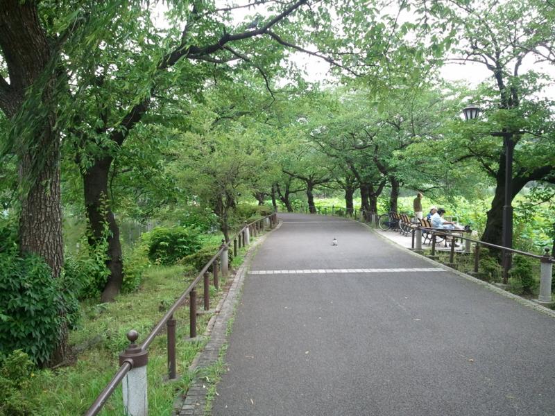 【2011/6/20】 不忍池②
