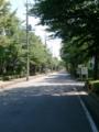 【2011/7/12】 並木道