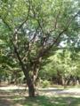 【2011/7/12】 鳩の群れ