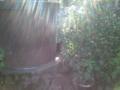 【2011/8/28】 白山神社・クロネコに睨まれる