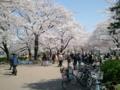【2012/4/9】 不忍池①
