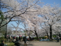 【2012/4/9】 不忍池②