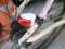 【2012/4/28】 新テールランプ