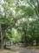 【2012/5/6】 公園で読書中
