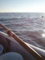 【2012/11/10】 三浦半島で海釣り