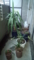 【2013/5/5】 4年目のベランダ植物