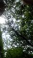 【2013/6/23】 木漏れ日