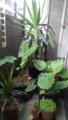 ベランダ植物たち。