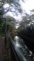 千川沿いの桜並木