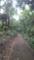 砧公園中のサイクリングロード