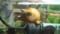 これがメダカの産卵用魚礁です