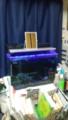 青色LEDも光るんです
