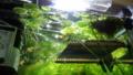 浮き草も順調に成長中