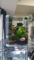 新しいエビ用水槽!