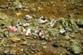 京都新聞写真コンテスト 夏の川