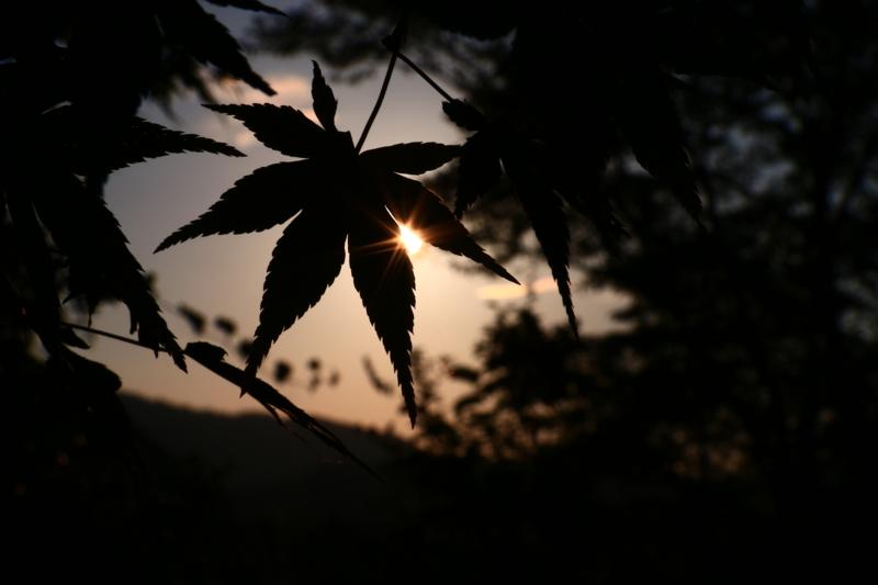 京都新聞写真コンテスト shining leaf