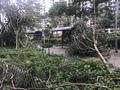[0917][香港][台風]