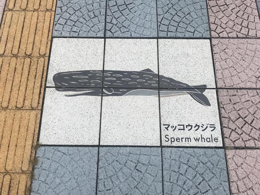 [0928][和歌山][くじら]