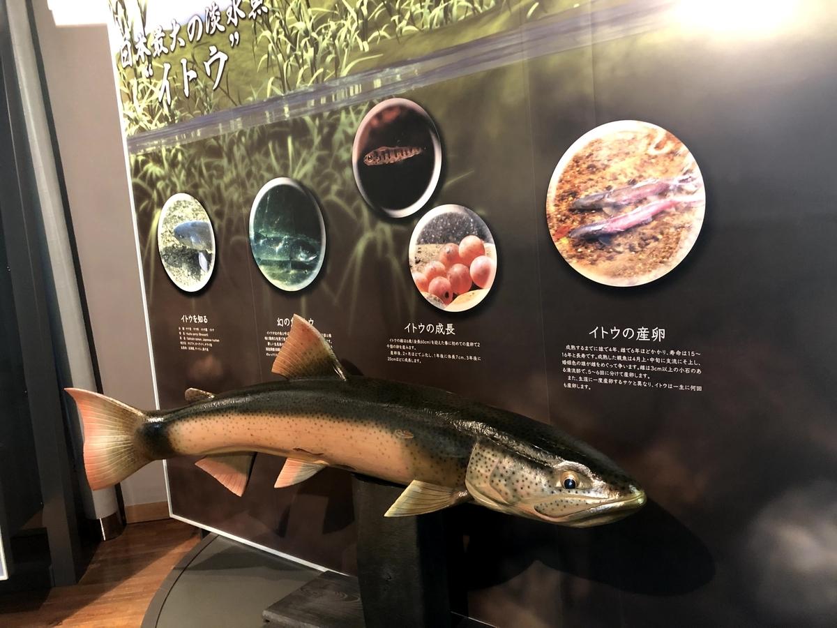 f:id:junichisuzaki:20200905122430j:plain