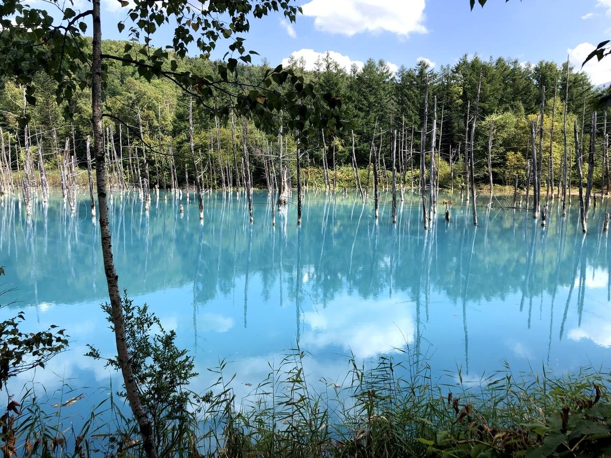 青い池01
