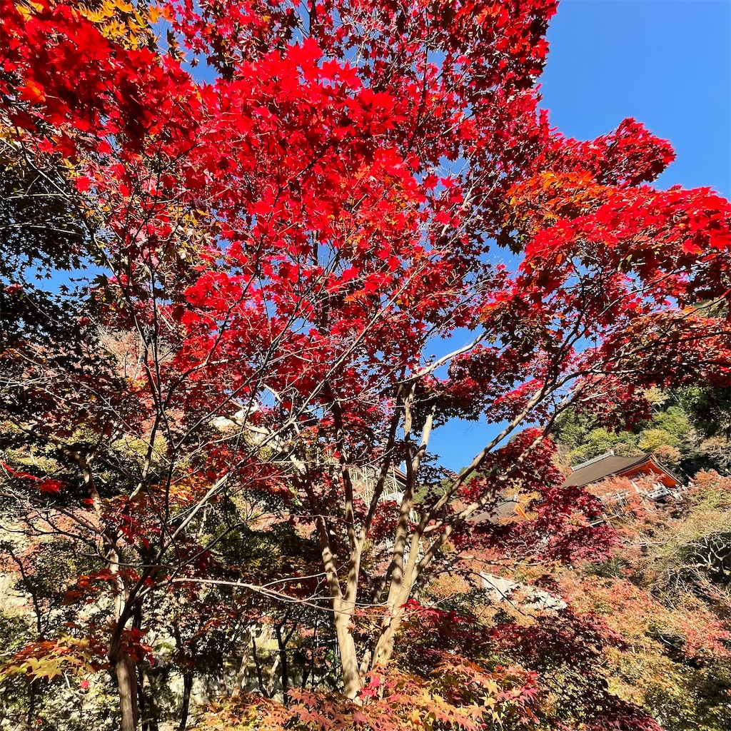 f:id:junichisuzaki:20201122084145j:image