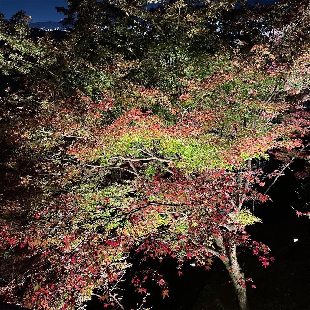 f:id:junichisuzaki:20201122084520j:image