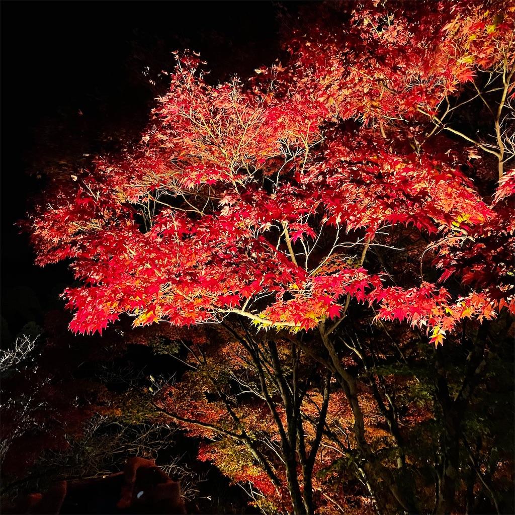 f:id:junichisuzaki:20201122084553j:image
