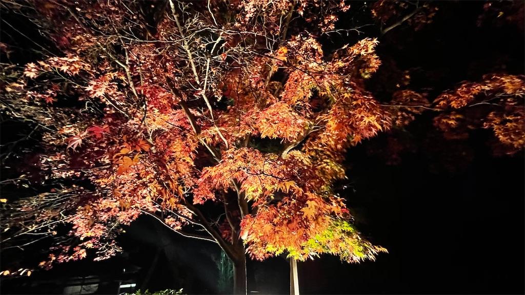 f:id:junichisuzaki:20201122084832j:image