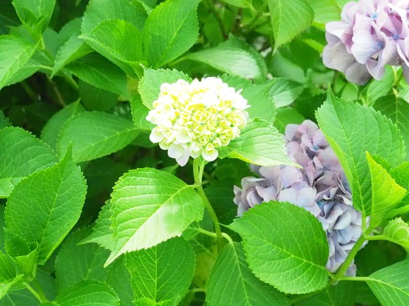 河内長野・花の文化園