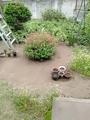 わたしの部屋から見た庭