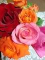 台風で背中がだるい落ち込む花は癒やし