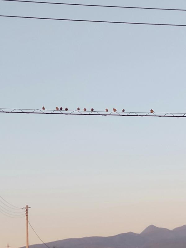 野鳥の強さ見倣いたい学べる鳥から