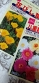 百均で花の種を買ってみた