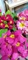 かわいい花々。。