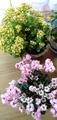 祖母90代の家の花
