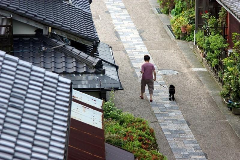 京都新聞写真コンテスト 朝の散歩