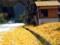 朽木鯖街道の秋