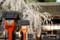 平野神社「魁桜」