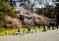 御苑内で春を楽しむ
