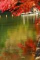高雄菖蒲池