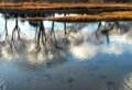 鴨川水流画