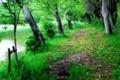 雨上がりに新緑