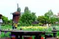 新旭花菖蒲園