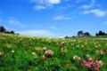 京都新聞写真コンテスト 天空の園
