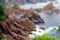 大島の海金剛