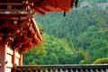 京都新聞写真コンテスト 春風献上