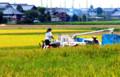 京都新聞写真コンテスト 豊子と万作