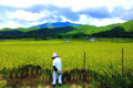 京都新聞写真コンテスト 天高く腰痛し