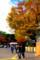 京都新聞写真コンテスト キャンパスの秋